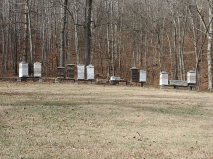 FOR SALE: Farm in Dickson County